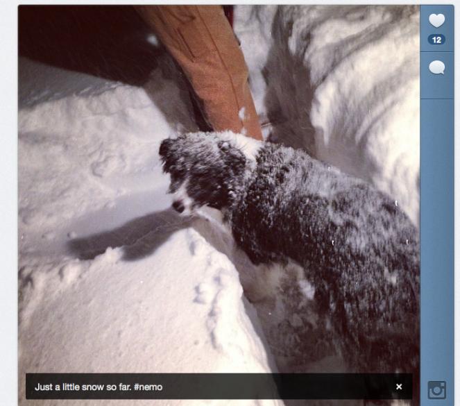 Instagram of my snowy dog