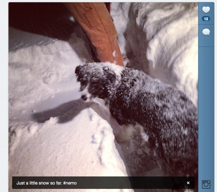 Instagram of my snowy dog